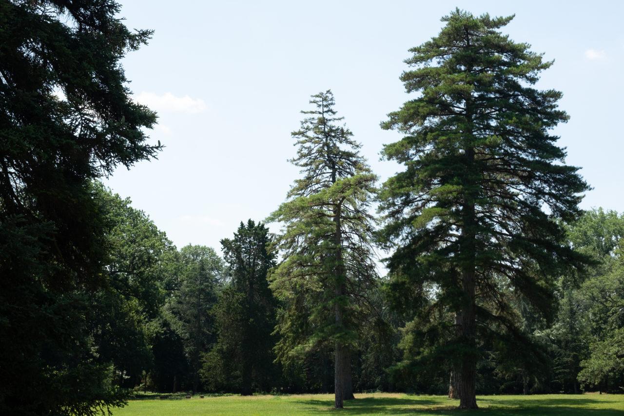 Le parc du Château du Gua, en direction de la ferme-usine aux 200000poules